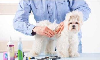 toilettage pour chien grenoble salon canin coupe entretien grenoble url communiqu s. Black Bedroom Furniture Sets. Home Design Ideas