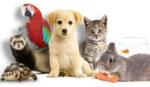 Daktari, services animaliers