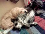 INOU pour un chien inouï – Allevard