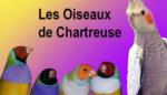 Les oiseaux de Chartreuse