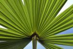 Green-Time innovation végétale
