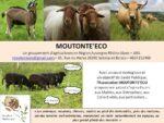 Moutont'éco  – Association pour la promotion de l'éco-pâturage en Nord Isère