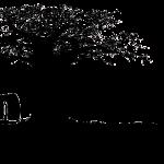 Sam'Branche – grimpe d'arbres et voyages dans les arbres